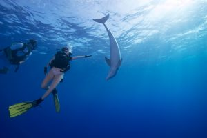 MILK & HONEY 125-foot Palmer Johnson luxury charter superyact diving